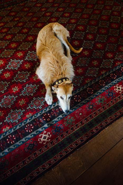 Playful wedding dog